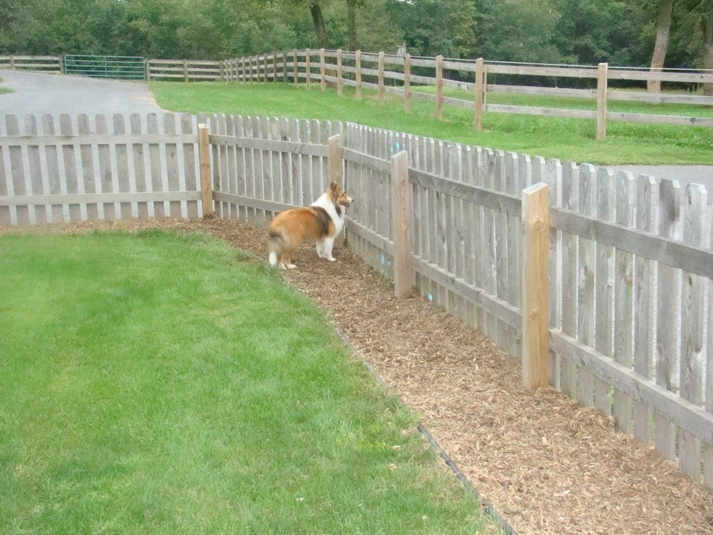 Dog Run Ideas Pea Gravel Along Fence Doe Dog Trail Solution In Dog Run