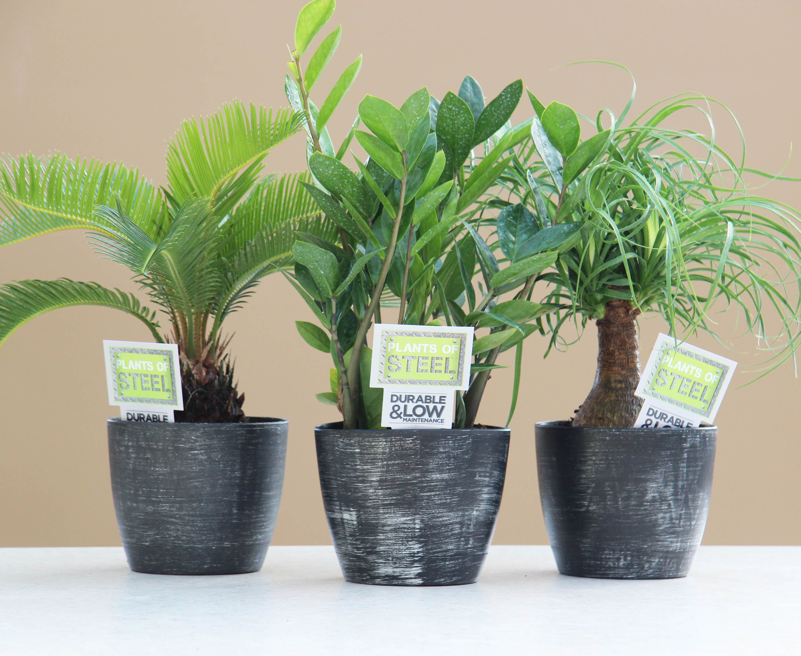 Easy Care Indoor Trees Plants Of Steel Easy To Care For House Plants Tropical
