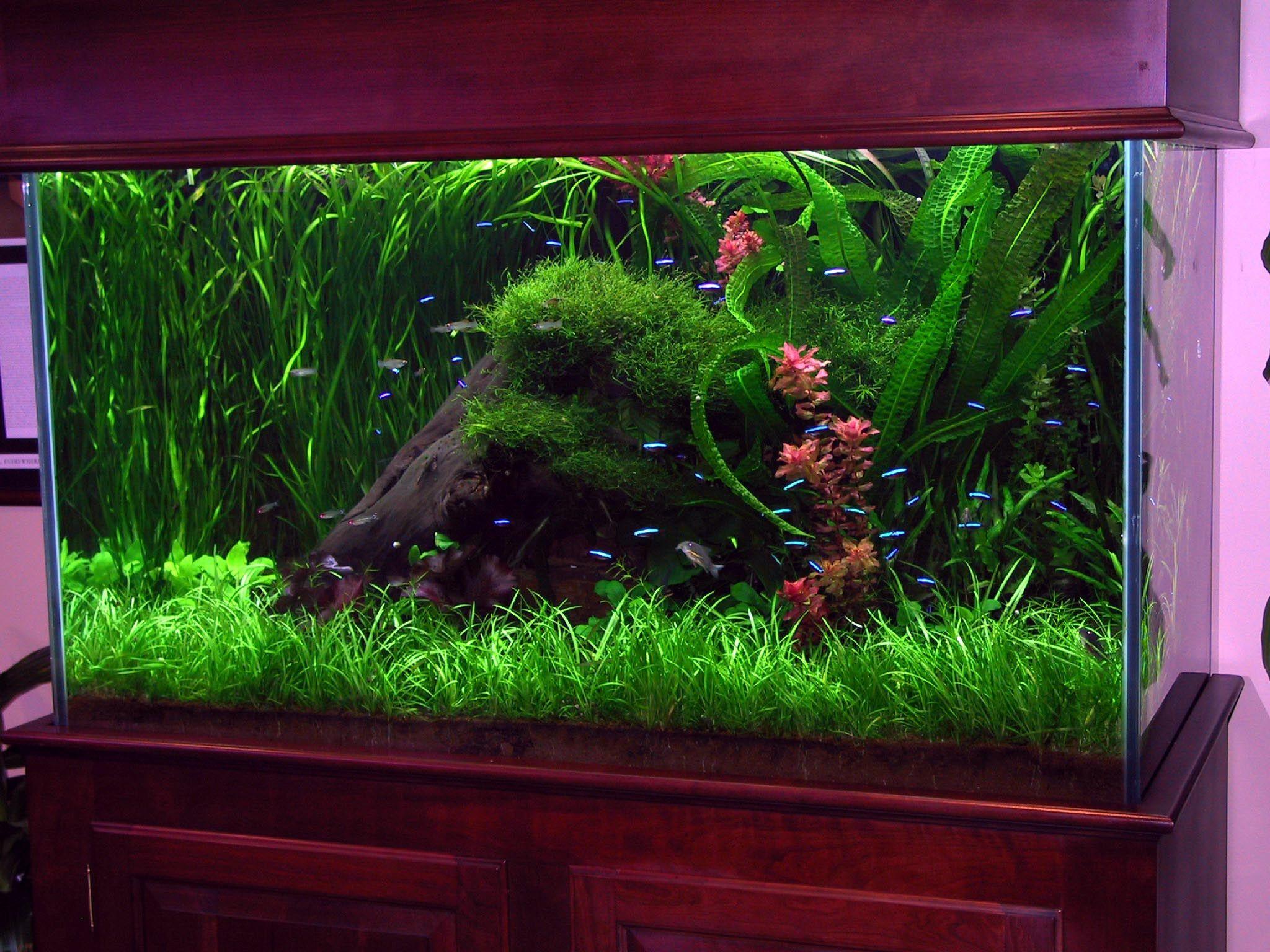 Interior designs ideas corner fish tanks aquariums acrylic tank design filter gravel custom large start background