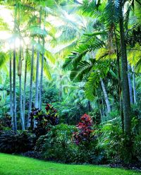 HAYMAN ISLAND RESORT | DURIE DESIGN - Projects | Pinterest ...