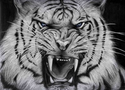 Cool White Tigers wallpaper background | Animals | Pinterest | Tiger wallpaper, Wallpaper and ...