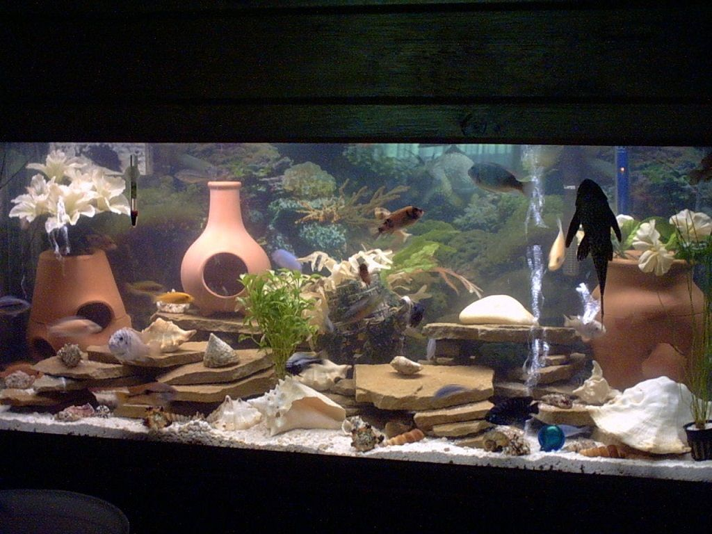 Cool fish tank ornaments more