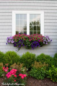 Flower Boxes on Pinterest | Window Boxes, Fall Window ...