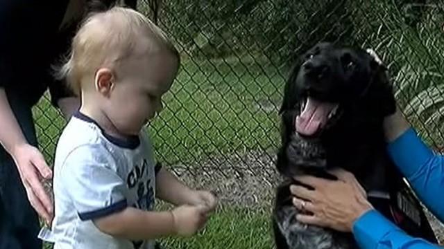 Hero Dog Saves Boy from Abusive Babysitter - ABC News - pet babysitter