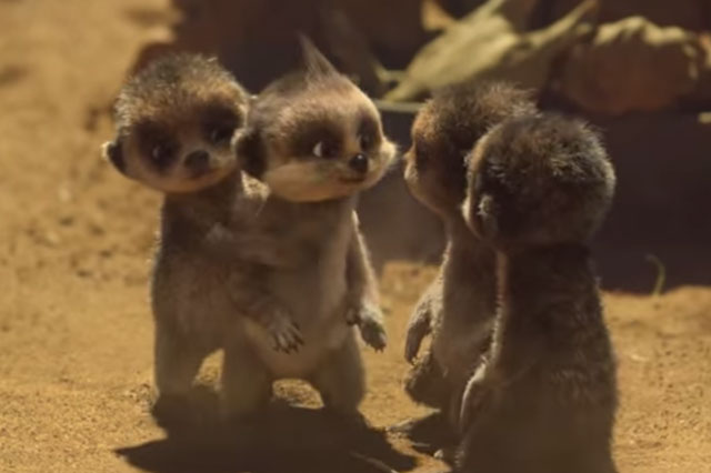 Cute Cat Gif Wallpaper Compare The Meerkat Fans Devastated By Baby Oleg S