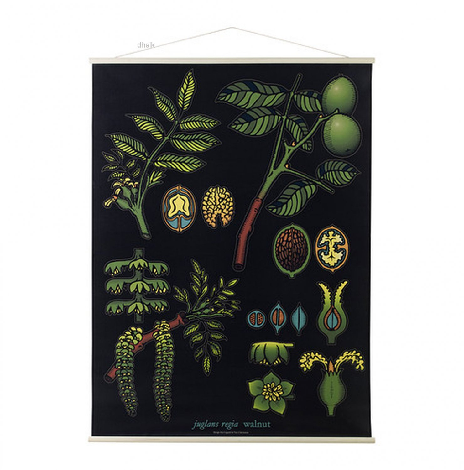 Ikea Poster Ikea Sibbared Art Poster Print Botanical Walnut Last One