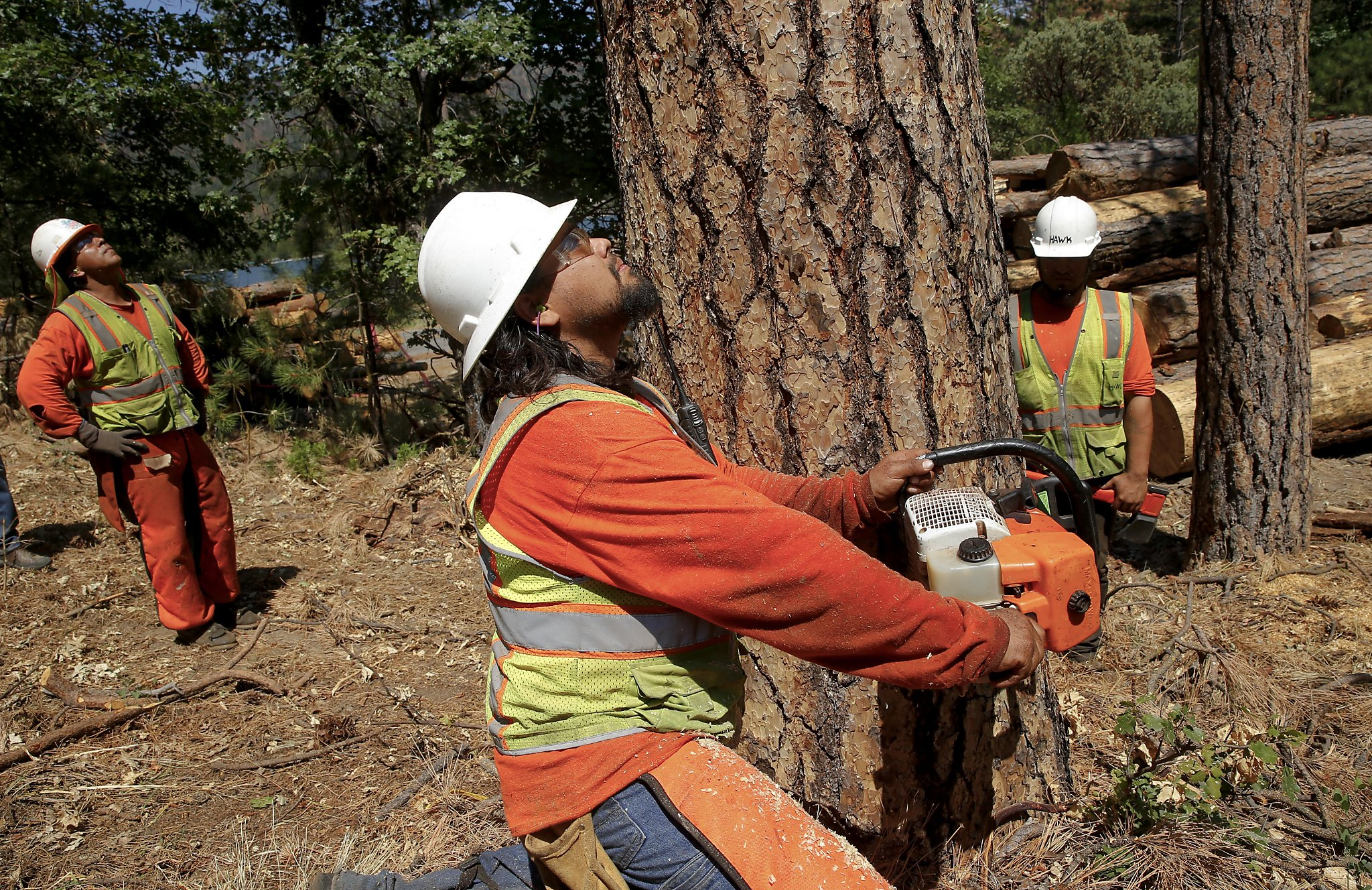 Wallpaper Falling Down California Has 66 Million Dead Trees But Nowhere To Put