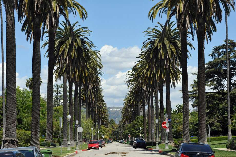 The Stories Of California39s Most Famous Trees Including