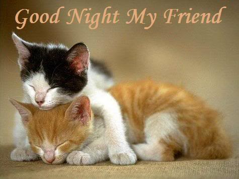 Cute Thanksgiving Wallpaper Cat Good Night My Friend Cute Cats Bye Myniceprofile Com