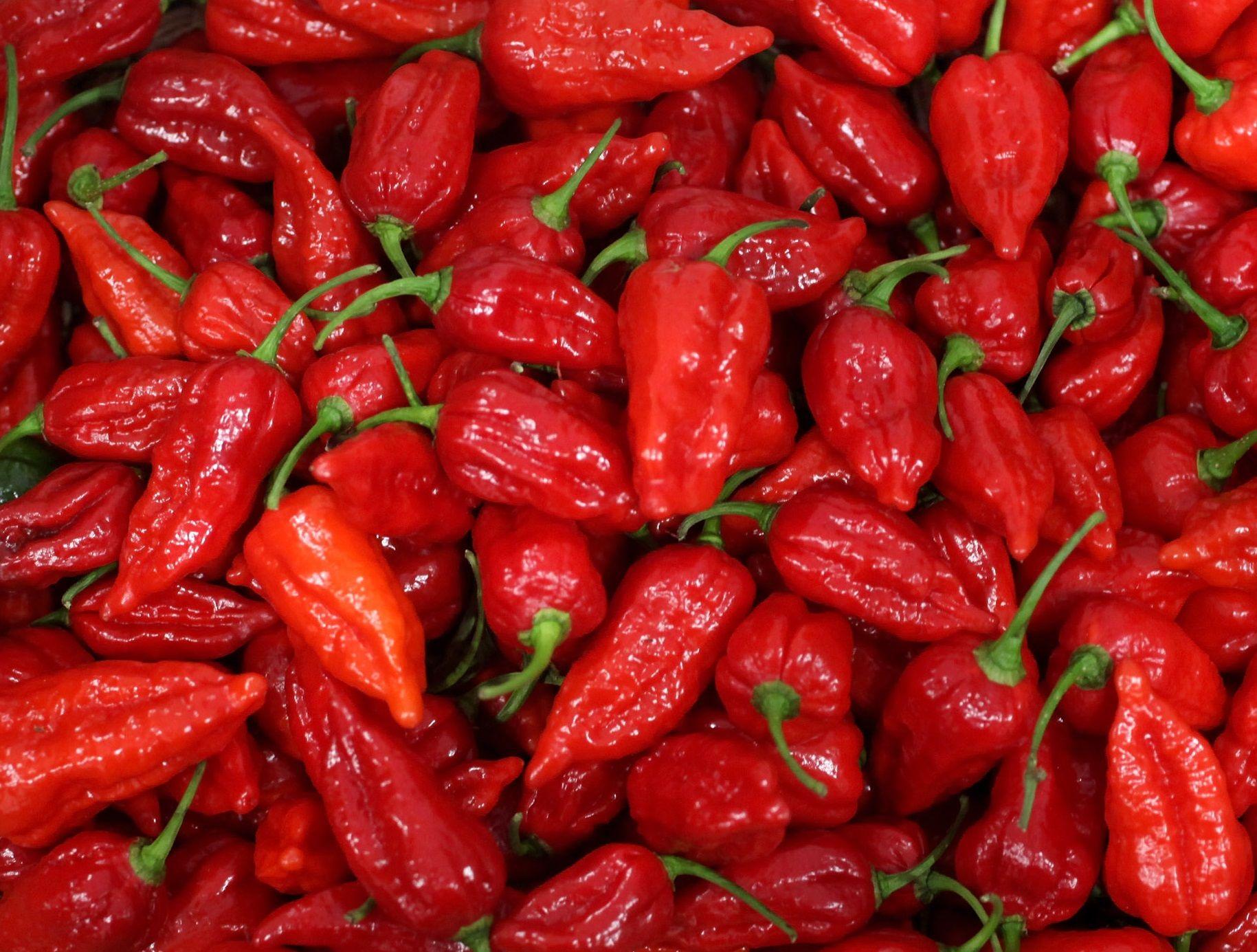 Fullsize Of Carolina Reaper Pepper For Sale
