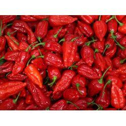 Debonair Carolina How To Safely Eat Hottest Chili Pepper Carolina Reaper Pepper Powder Sale Carolina Reaper Pepper Sale Nz