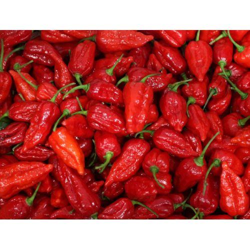 Medium Crop Of Carolina Reaper Pepper For Sale