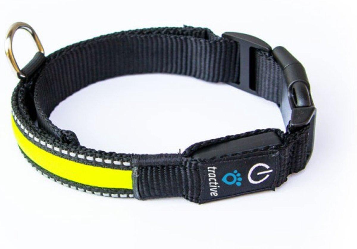 Hondenhalsband Met Licht : Led verlichting halsband hond led hondenhalsband verlichting met