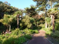 Westbourne: tropical gardens on a...  Chris Downer ...