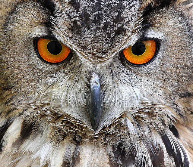 Large Hd Wallpapers For Laptop The Eyes Have It 169 Walter Baxter Cc By Sa 2 0 Geograph