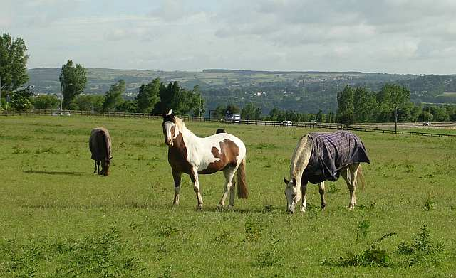 Hd Horse Wallpaper Download Horses In Field Off Priesthorpe Road 169 Betty Longbottom Cc