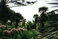 Alum Chine tropical gardens  Chris Downer cc-by-sa/2.0 ...