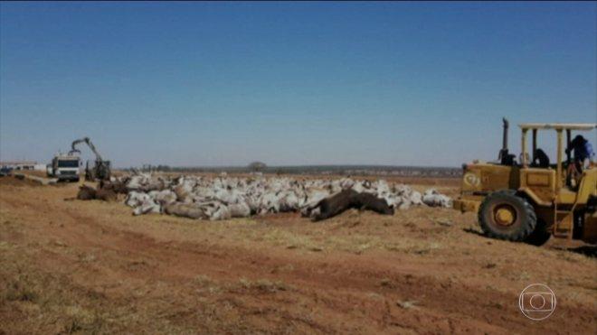 Mais de mil animais morreram em uma fazenda em MS por suspeita de botulismo