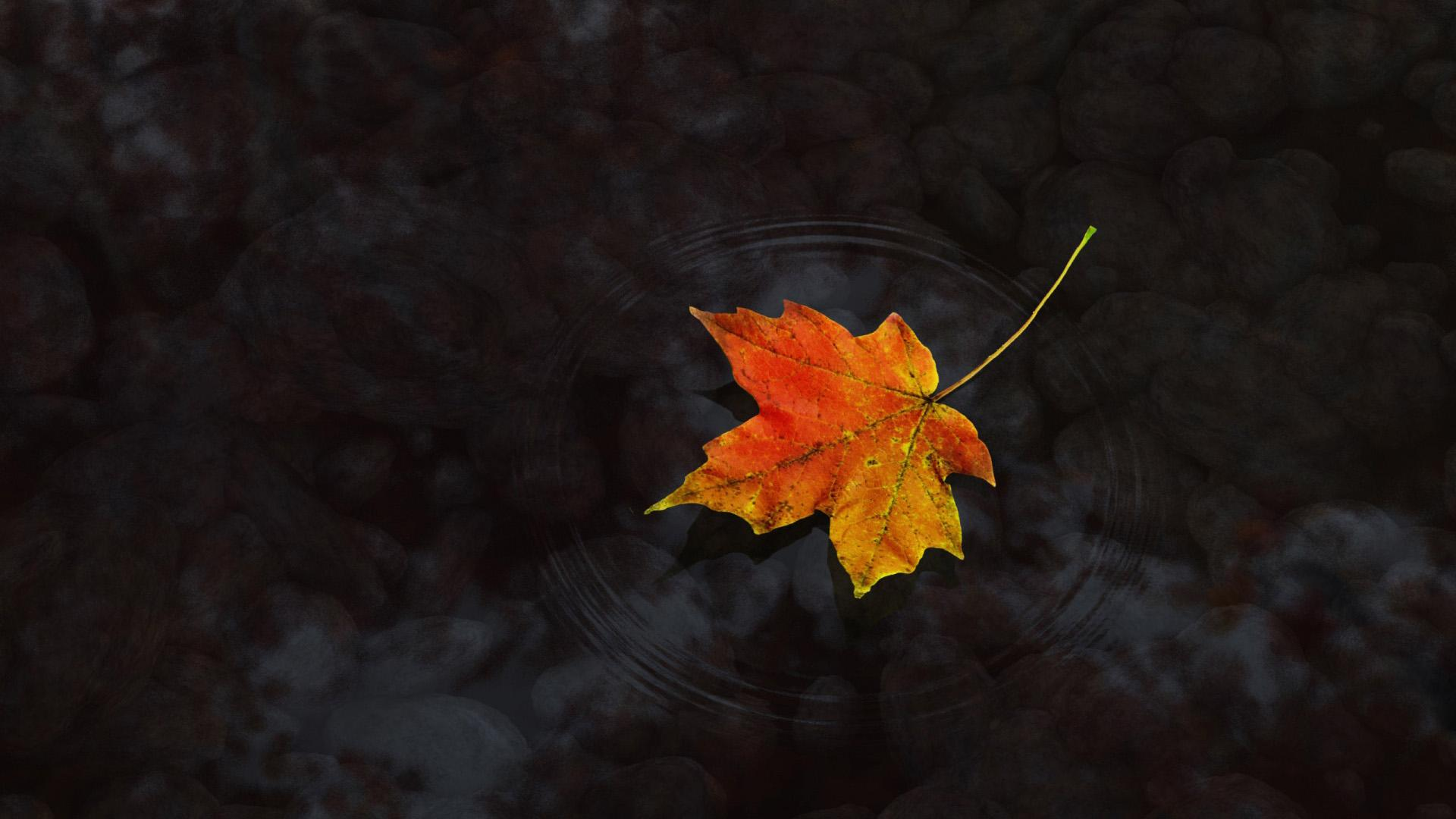 Dual Monitor Fall Wallpaper Maple Leaf Wallpapers Wallpaper High Definition High