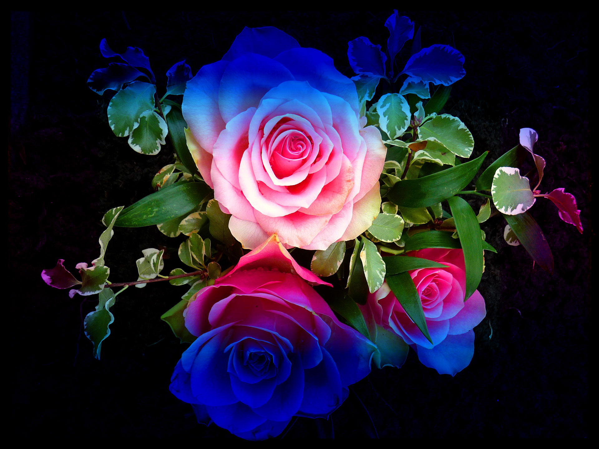 Wallpapers Love Quotes Free Download Zedge Colourful Roses Wallpaper High Definition High Quality