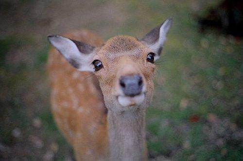 Girl Sweet Wallpaper Animal Bambi Deer Very Cute Image 149659 On Favim Com