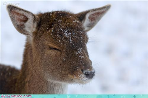 Black And White Girl Drawing Wallpaper Cute Deer Fawn Snow Winter Image 178764 On Favim Com