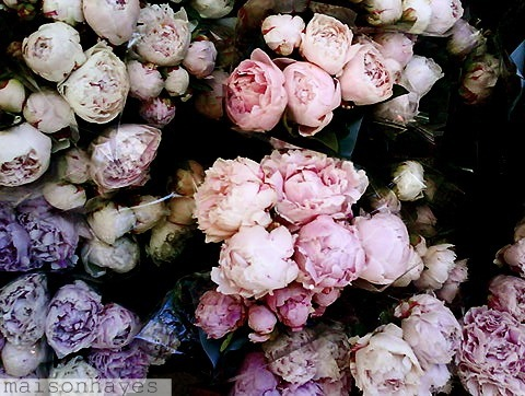 Hijab Wallpaper With Quotes Beautiful Flowers Peonies Photography Pink Image