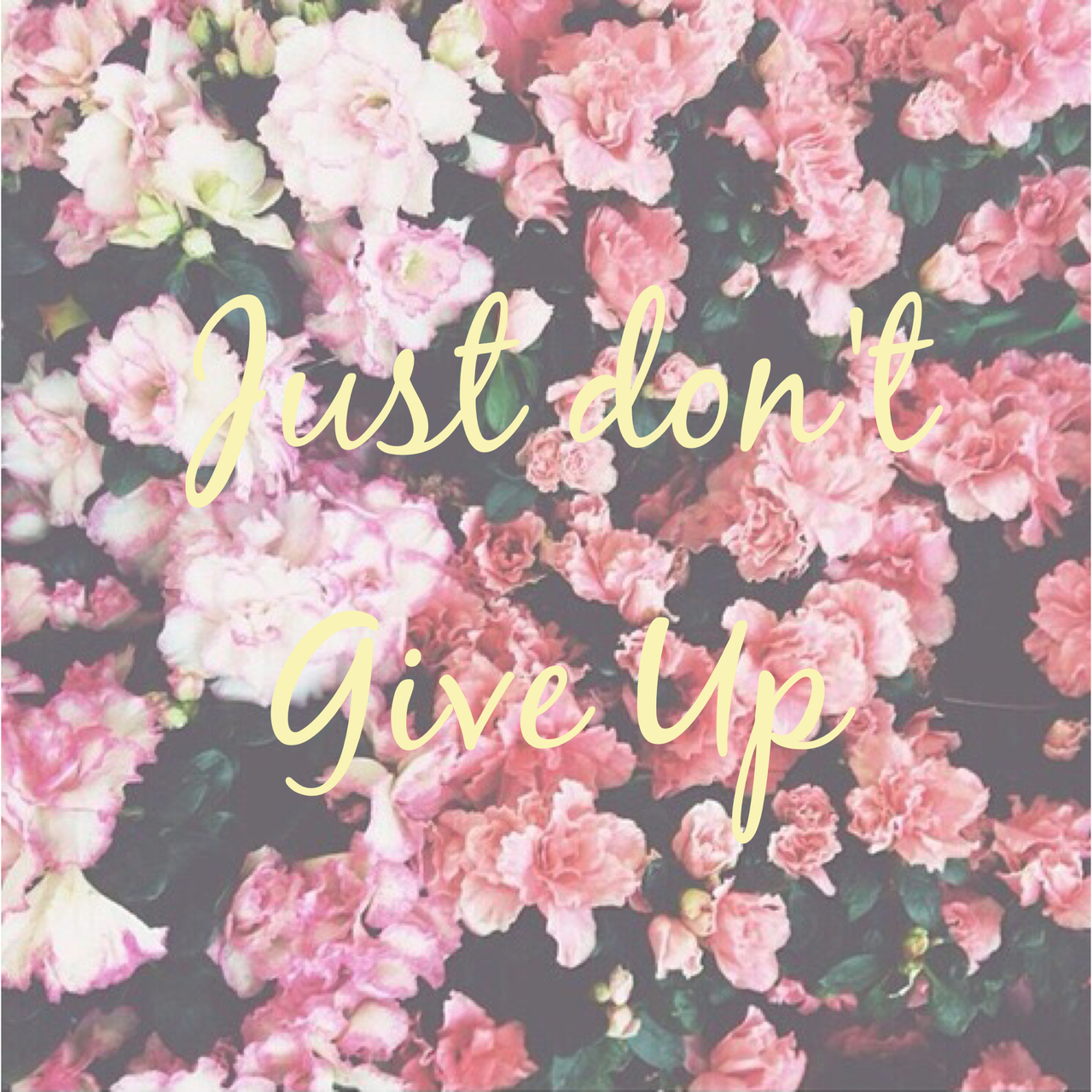 Pink Flower Wallpapers With Quotes Original Size Of Image 2877980 Favim Com