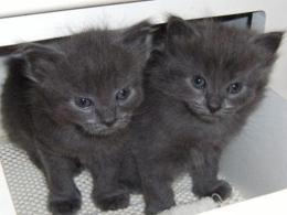 Grey Twins