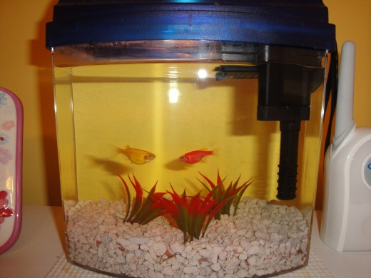 Fish Tank: Your Fish Options and Care Instructions for a 1 3 Gallon
