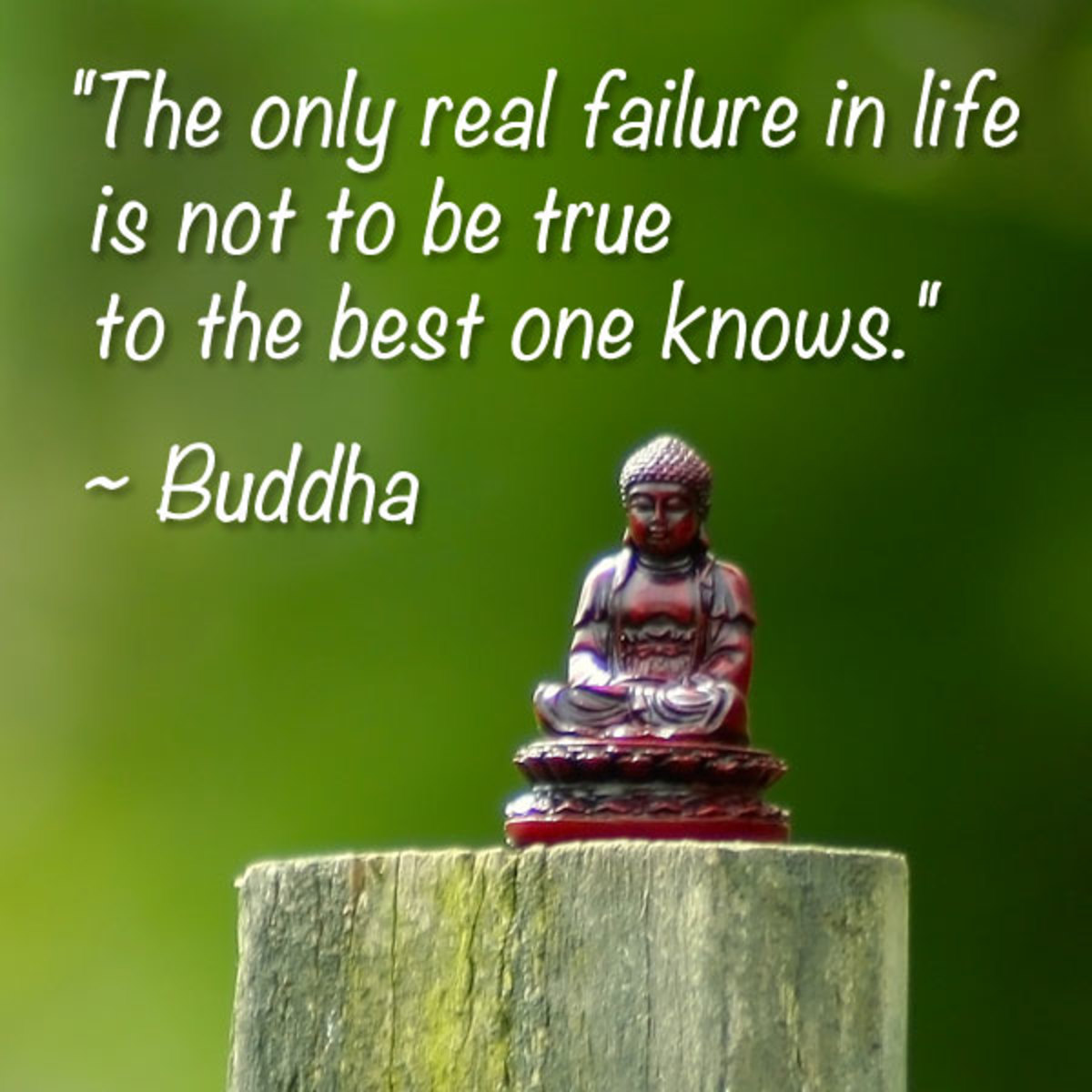 Pinterest Desktop Wallpaper Lotus Quote Top 3 Mind Blowing Buddha Quotes Explained