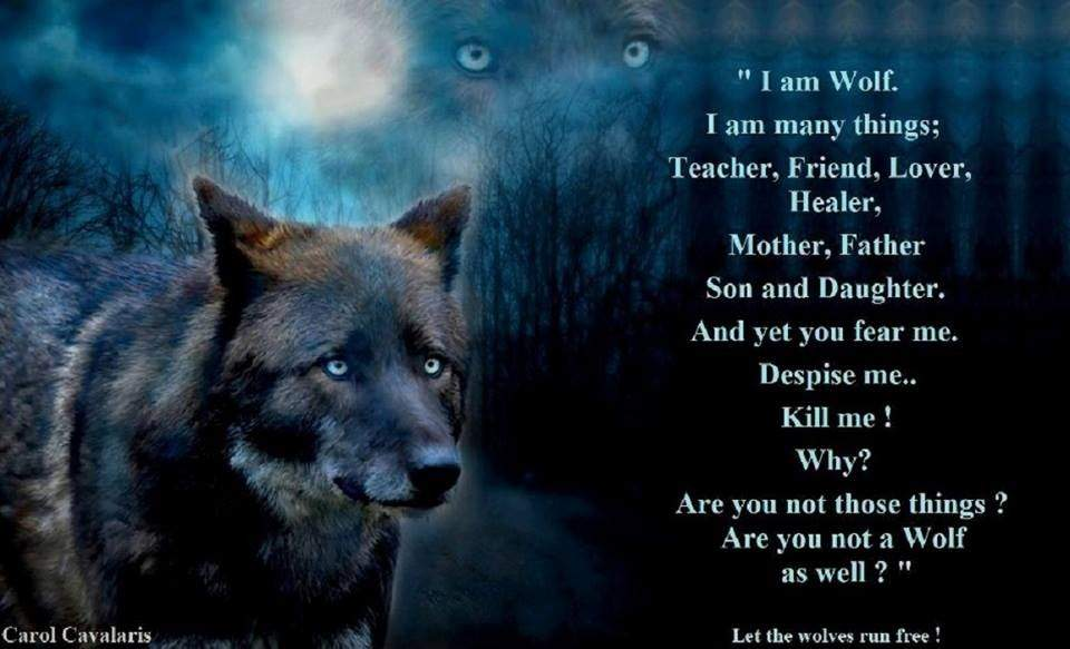 Lone Wolf Wallpaper Quote Wolf Poems Wiki Anime Amino