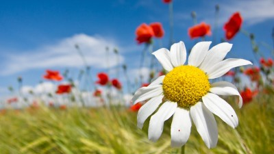 Flower Wallpapers | Best Wallpapers