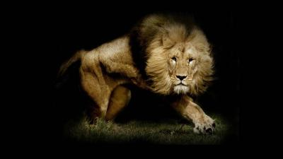 Lion Wallpapers | Best Wallpapers