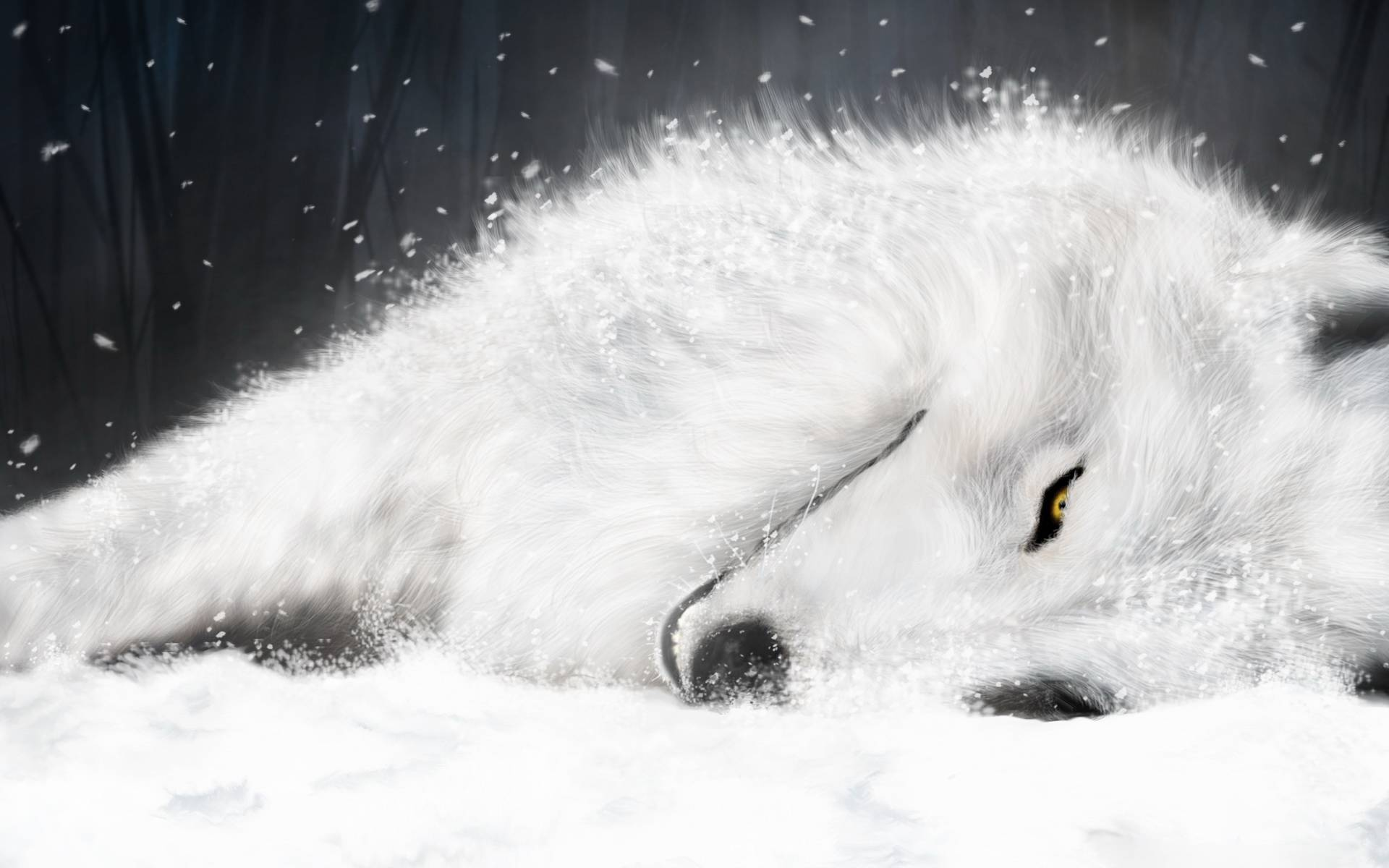 Coole Wolf Bilder Wolf Wallpapers Best Wallpapers