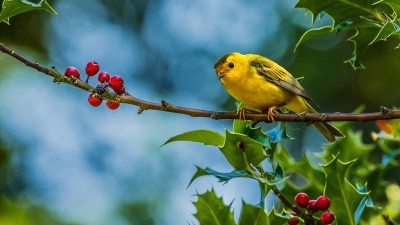 Birds Wallpapers | Best Wallpapers