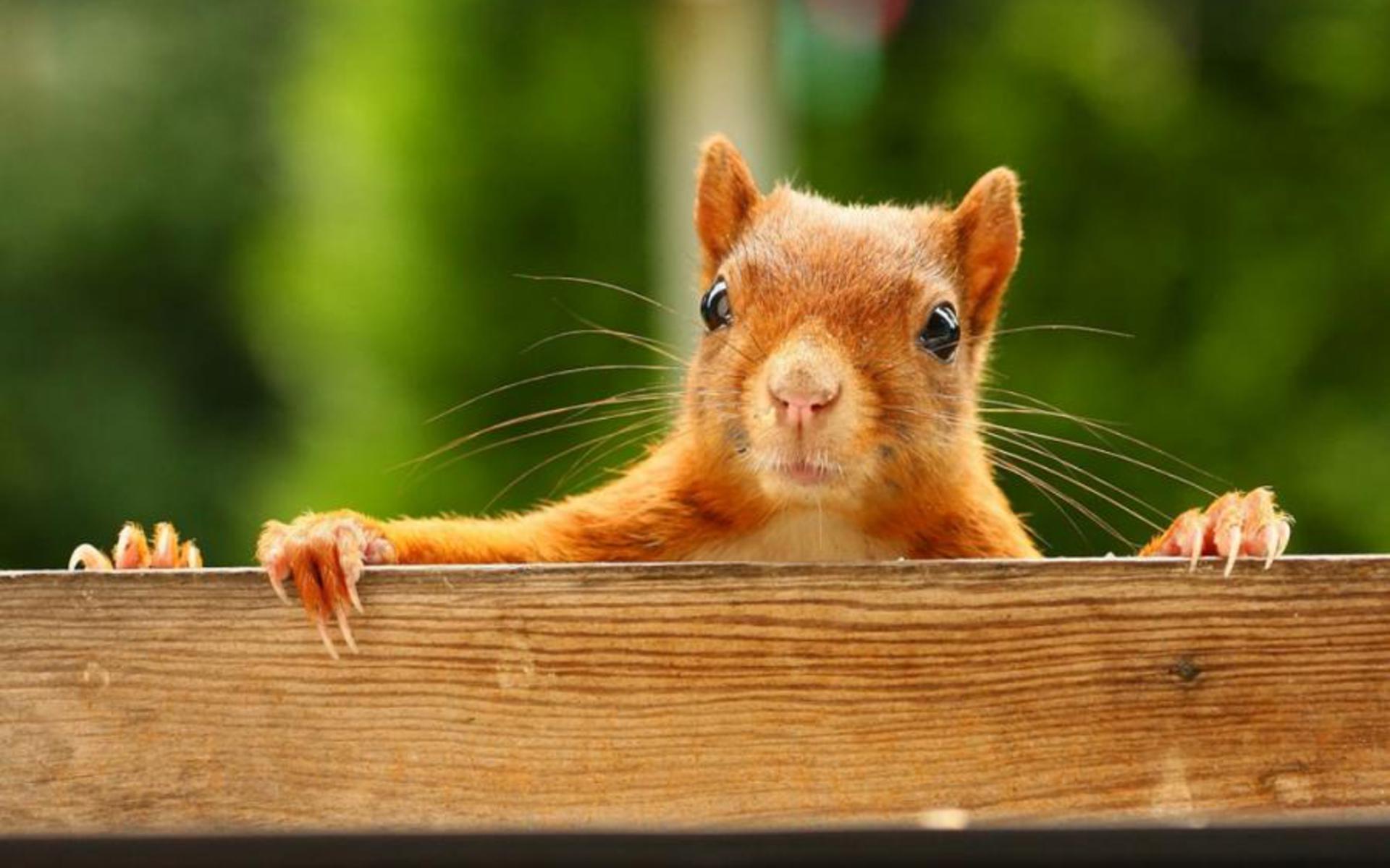 Cute Baby Hedgehog Wallpaper Squirrel Wallpapers Best Wallpapers