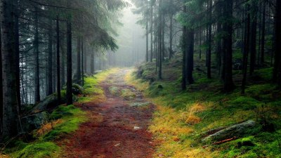 Nature Wallpapers   Best Wallpapers