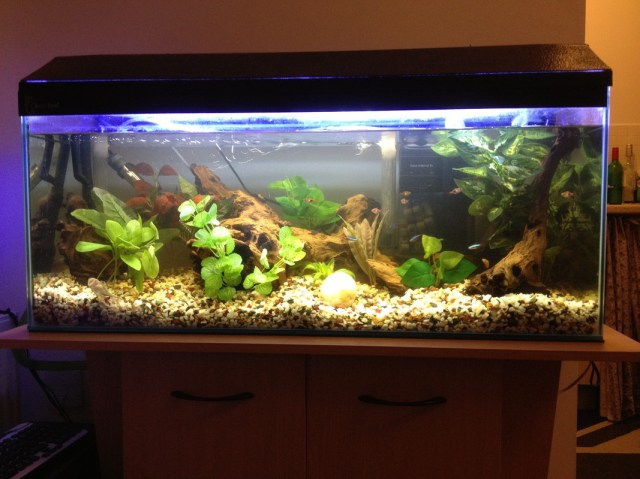 Related Pictures tropical fish in an tank facebook cover photo