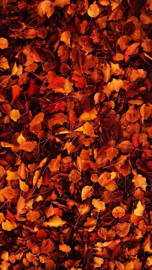 Fall Leaves Iphone 5 Wallpaper Autumn Colorful Cozy Crisp Fall Image 4821973 By