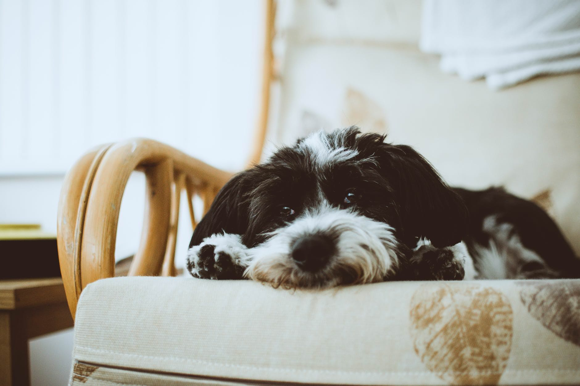 Impeccable Ways Dog Fleas Can Impact On A Health How Often Should I Treat My Dog Skin Problems Itchy Skin How Often Should You Ba A Dog How Often Should You Ba A Dog bark post How Often Should You Bathe A Dog