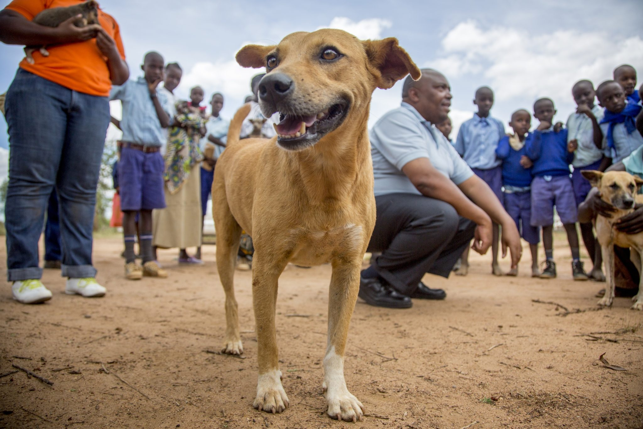 Breathtaking Animal Welfare World Animal Protectioncelebrated A Major Achievement Giving Over Million Rabies Vaccinations Todogs Se Dogs Kenya Have A Bright Future Thanks To This Rabies Day bark post How Often Do Dogs Need Rabies Shots