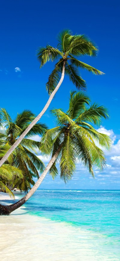 Beautiful beach, palm trees, sea, blue sky, clouds, tropical 1242x2688 iPhone XS Max wallpaper ...
