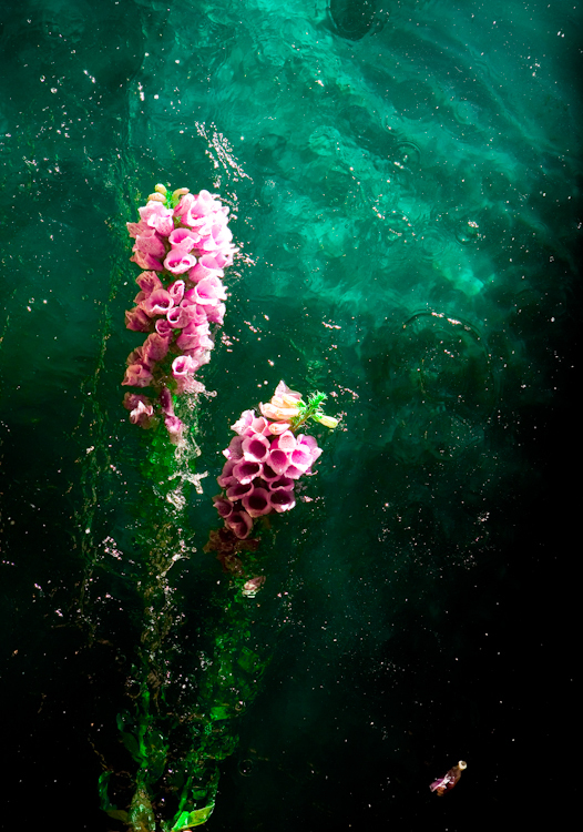 Cute Anime Couple Wallpaper For Iphone Flower Flowers Photography Water Image 266317 On