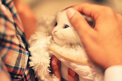 Sweet Cute Baby Boy Wallpaper Beautiful Cats Cute Girl Girly Image 306880 On