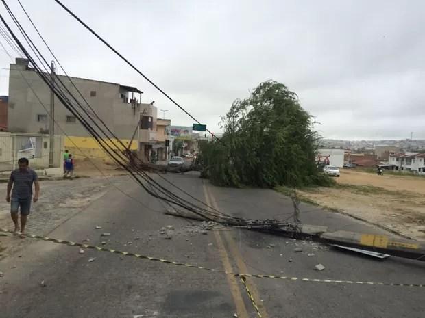 Árvore caiu na Avenida Leão Durado, na Vila Kenedy, em Caruaru (Foto: Franklin Portugal/ TV Asa Branca)
