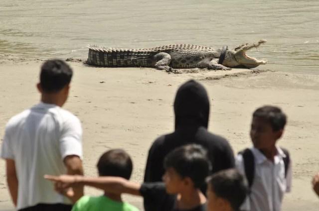 Moradores observam o crocodilo que foi visto com um pneu em torno do pescoço (Foto: Mohamad Hamzah/Antara Foto/Reuters)
