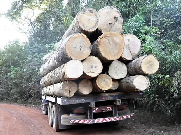 Operação do Ibama em MT (Foto: Leandro J.Nascimento/Agrodebate)