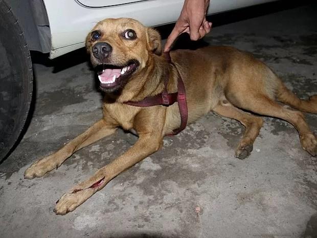 Cão que teria sido atacado por pitbull tinha ferimento na pata e cabeça   (Foto: Jamile Alves/G1 AM)