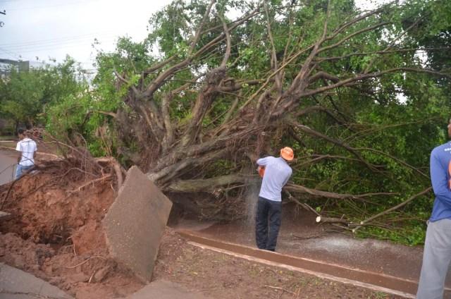 Secretaria Municipal de Meio Ambiente de Cacoal precisou cortar a árvora para conseguir retirá-la da rua (Foto: Rogério Aderbal/G1)